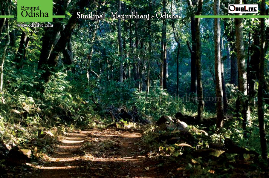 Similipal Tiger Reserve