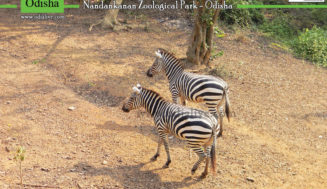 Nandankanan Zoological Park : A Photo Story